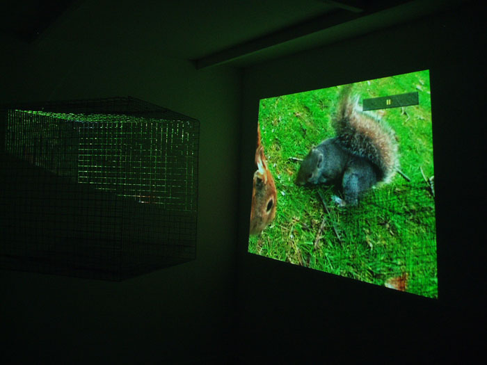 Installation Red Squirrel