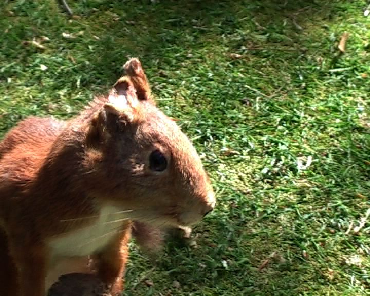 Installation Red Squirrel video