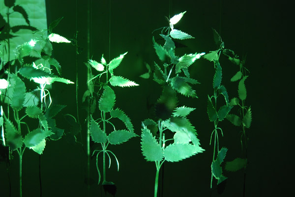 nettle video sculpture installation